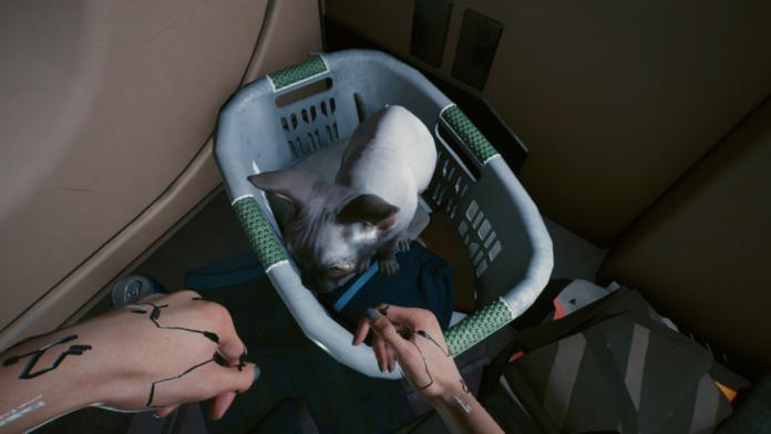 Cyberpunk 2077: Comment obtenir votre propre compagnon de chat | Guide de localisation des animaux