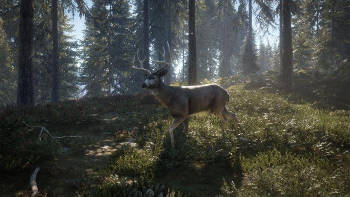 7 meilleurs jeux de chasse sur Xbox One